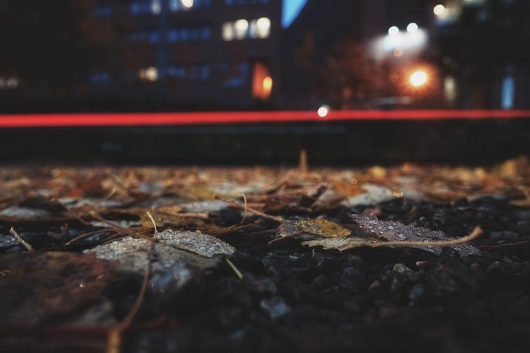 Close-up of dry leaves on street at night