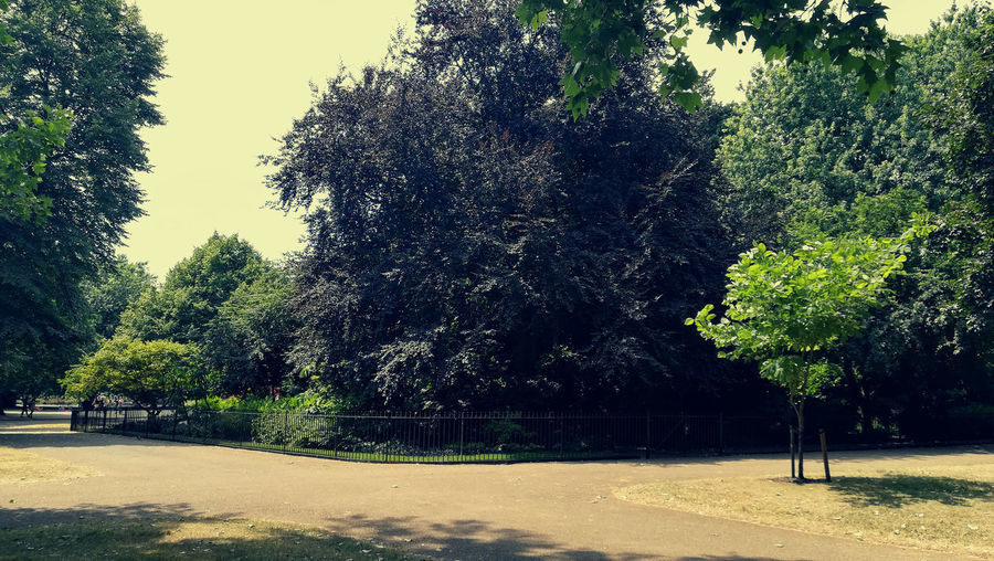 hyde park greenery Hyde Park London Walking Around Nature Beauty In Nature Clear Sky Day Direction Environment Green Color Growth Hyde Park, London Land Nature No People Outdoors Park Plant Road Shadow Sky Sunlight Tranquil Scene Tranquility Tree