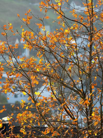 Low angle view of flowering tree against orange sky
