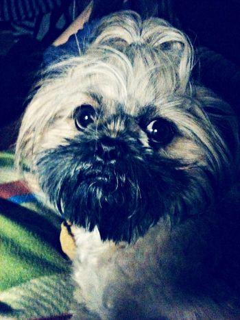 I Love My Dog Dogs Pets Cute