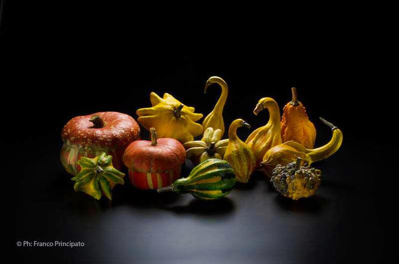Pumpkins, Food, Ornamental, Still Life Zucche, Poster,