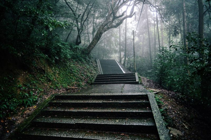 Empty Steps Amidst Trees During Foggy Weather
