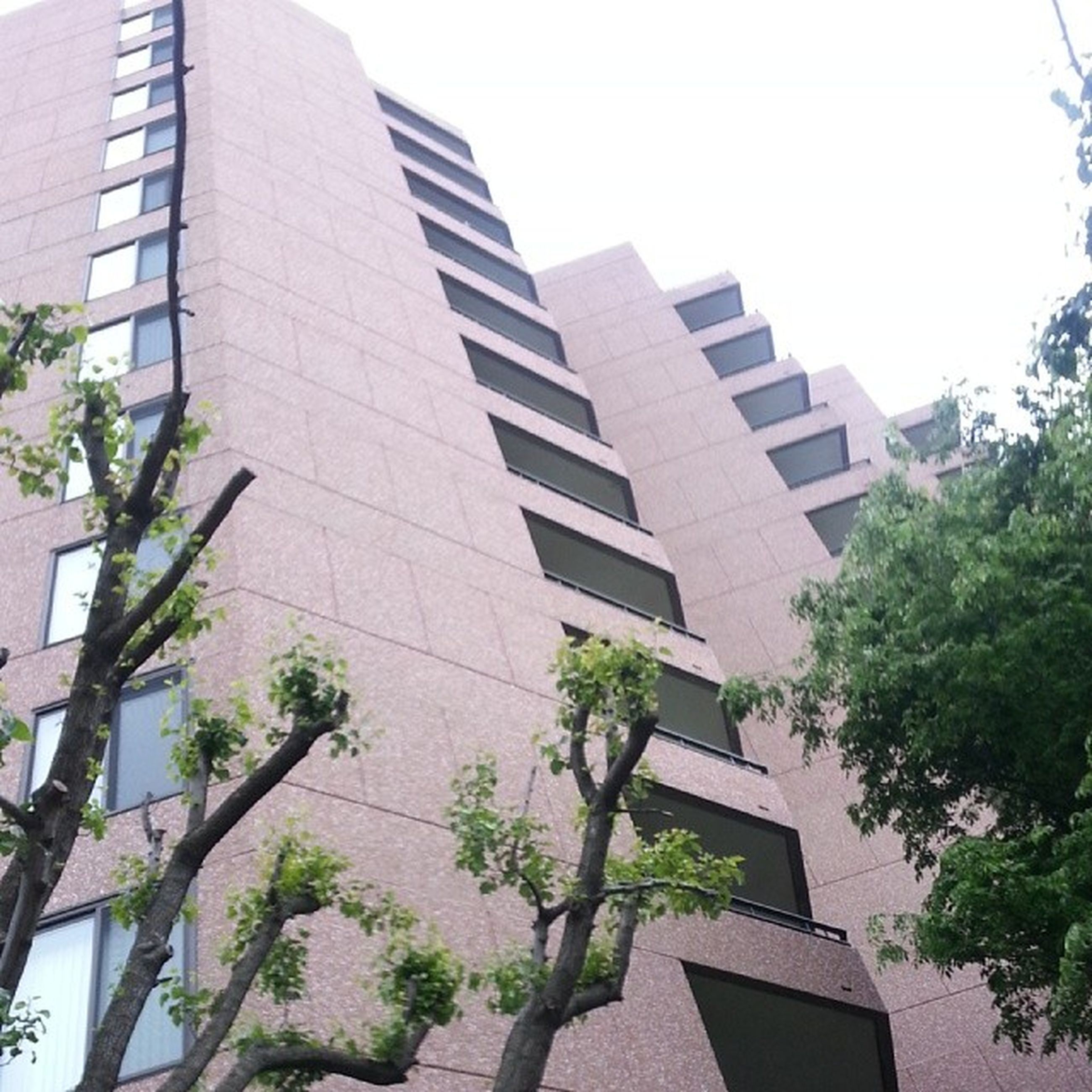 building exterior, architecture, built structure, low angle view, building, clear sky, city, tree, window, residential building, office building, growth, modern, residential structure, day, outdoors, no people, plant, balcony, tall - high