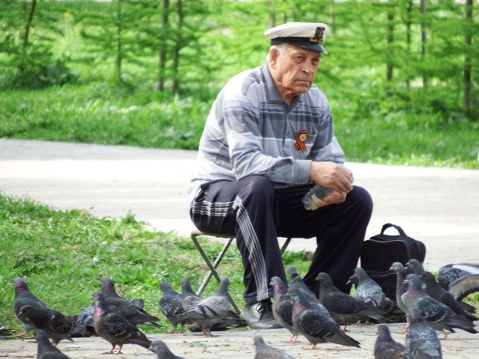 Senior man sitting on foldable chair while feeding pigeons at park