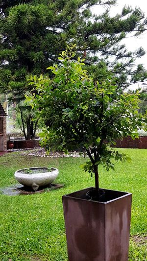 Growth Nature Tree Green Color Plant No People Beauty In Nature Outdoors Day Water Rain Rainy Days☔