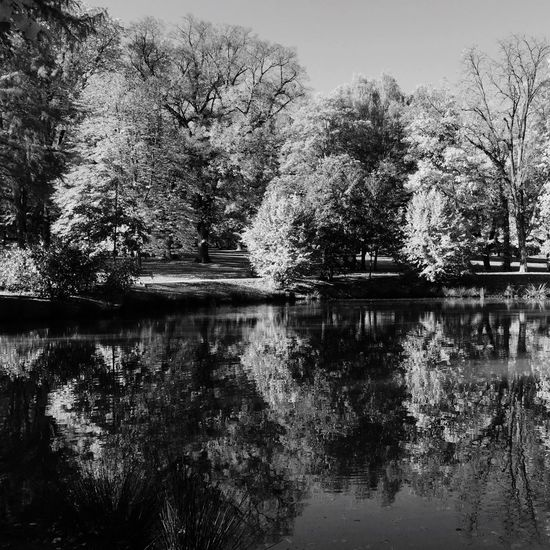 Tree Reflection Lake Water Nature Growth Beauty In Nature Outdoors No People Day Tranquility Tranquil Scene Scenics Waterfront Sky Branch Ilovenature Relection On Water Blackandwhite