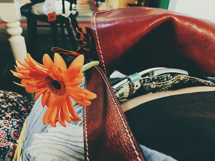 Gerbera Flower Midsommernight Flower flower in the bag