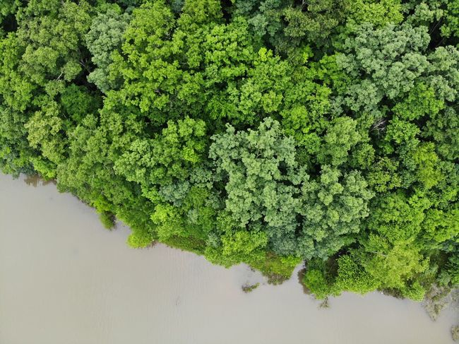 Mavic Air Aerial View Tourism Destination Aerial Shot Aeriel Photo Dronephotography Forest Photography Forest Trees Treelines Green Color Green Textured  Texture Textures and Surfaces Nature Nature Photography Water Grass Leaves