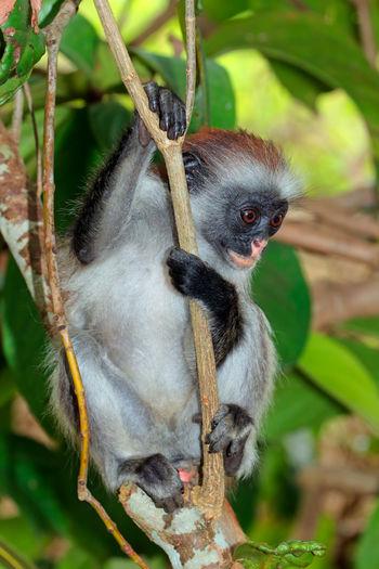 Close-up of a monkey on tree