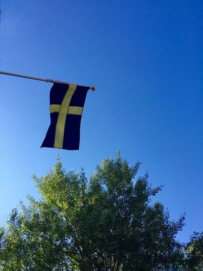 Tree Low Angle View Blue Clear Sky Hanging Copy Space Green Color Treetop Day Growth High Section Outdoors Scenics Bright No People Green Flag Sweden Flag Flags Glory
