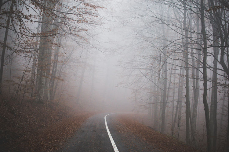 Bare Tree Beauty In Nature Branch Day Fog Foggy Foggy Morning Forest Forest Road LINE Mist Misty Morning Nature No People Outdoors Road Road Road Trip Scenics The Way Forward Tranquility Transportation Tree Tree Winding Road