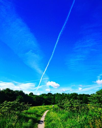Brookwood Country Park skyline. Vapor Trail Nature Beauty In Nature Scenics Contrail Blue Landscape No People Outdoors Sky Day Tree