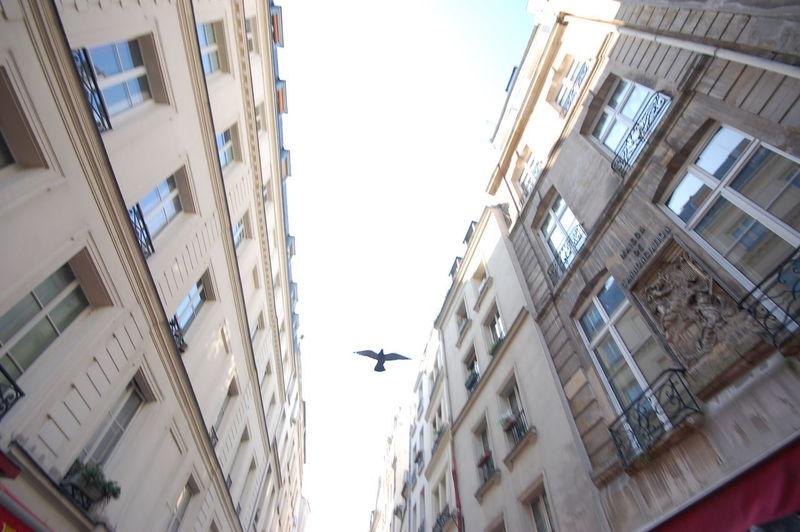 Paris Dove -