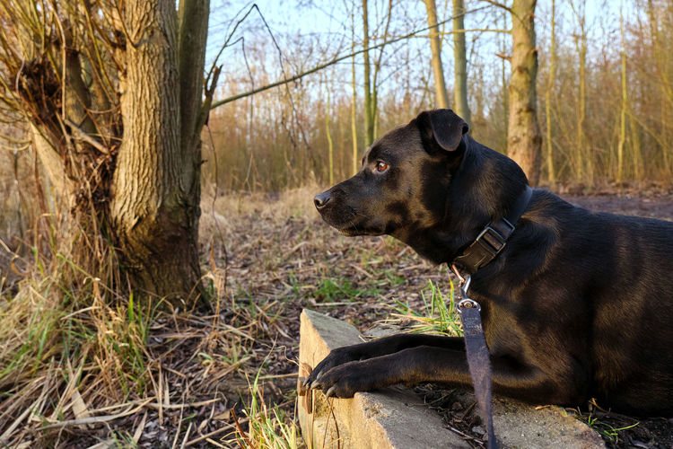 Dog looking away in forest