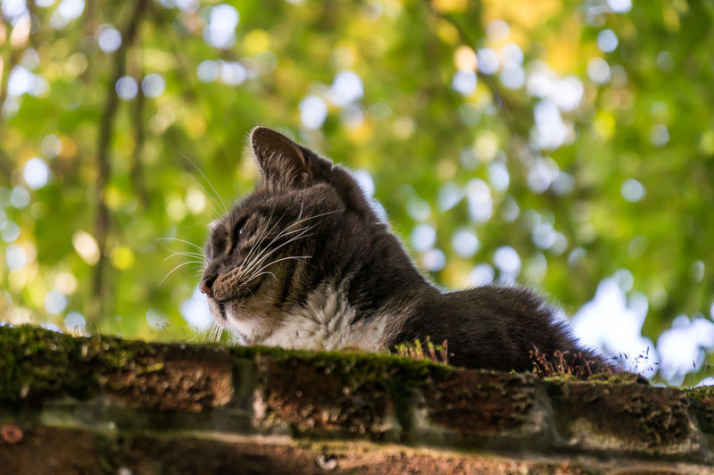 Strolling around the a British small town when I f ound this little fella enjoying a good summer day. And this is my entry on the photography's cliche that is taking photos of cats .Cat Outdoors Nature Photooftheday Restingcat Animals In The Wild Catoftheday Bokeh Bokehlicious Sunny Day Britishsummer shot on the Sonynex6 with the 1670z lens