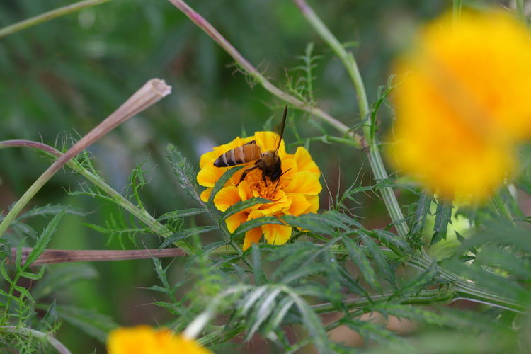 Beautiful bee collection honey on yellow flower