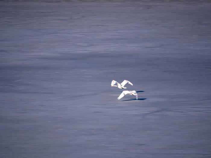 White bird flying over sea