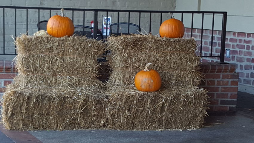 Fall decor Orange Color Pumpkin No People Outdoors Nature Freshness Day Jack O Lantern Love My Life  Love Where You Live Spartanburg City Life Downtown Pumpkins Hay Bales On The Patio Restaurant Its Fall Yall