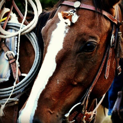 #horse #brown #cabin #cowgirl #cowgirl #tack #lasso #nature #west Nature Horse Brown Cowgirl Cabin West Tack Lasso