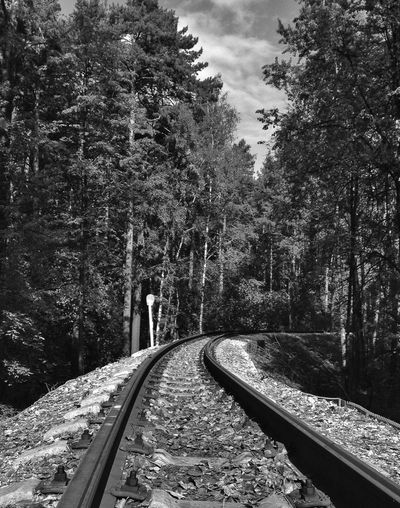 Railroad Tracks Amidst Forest