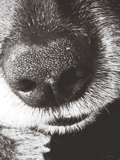 Snout Mammal