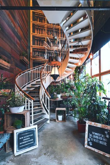 Potted plants on staircase in building