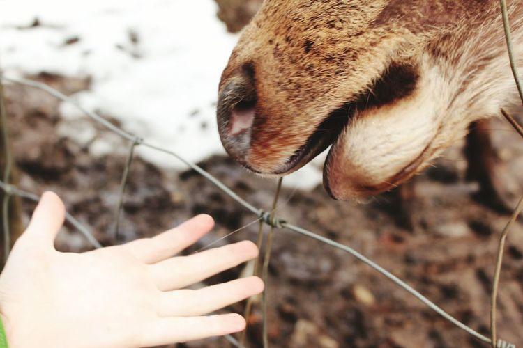 Kids Nofilter EyeEm Nature Lover Exploring Feeding Animals EyeEmBestPics Eyemygallery