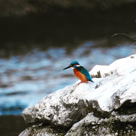 Animal Themes Animal Wildlife Animals In The Wild Beauty In Nature Bird Kingfisher Nature One Animal Outdoors Water