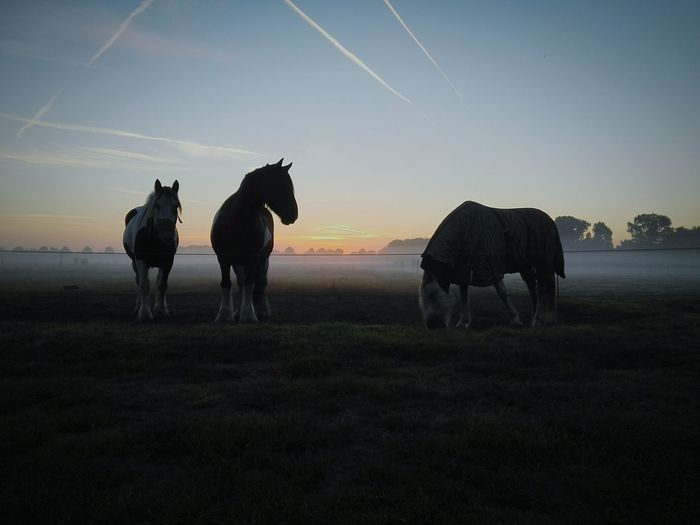 Things New Doing Amazing View Doing What I Love Birds Rise Of Nature Rise Nature Sunrisephotography Earlybird Dawn Sunlight Sun Sunrise_Collection Sunrise Dutchlandscape Farmer Holland Roosendaal Scenery Shots Dawn Of A New Day Earlymorning  Horse Horses