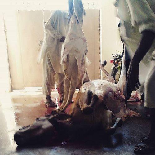 - Dead bodies! :p After_qurbani