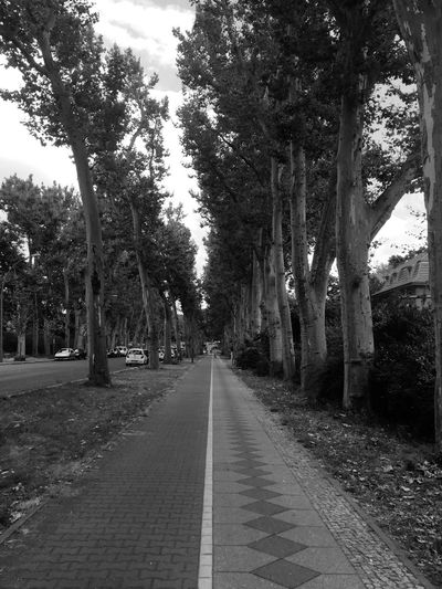 Walking Around Lines Blackandwhite Trees