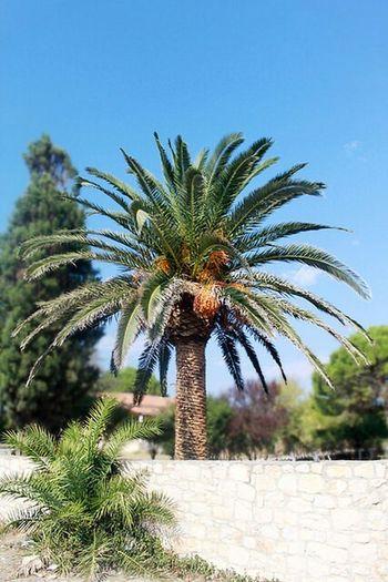 Palm Gerakas Zakynthos,Greece Zante dolphinart_ru