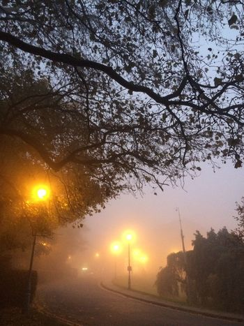 A foggy day Alexandra Palace Autumn Autumn Trees Beauty In Nature Fog Foggy Day Foggy Evening London Muswell Hill Muswellhill Nature No People Outdoors Sky Street Light Tranquility Tree Trees Twilight London Lifestyle
