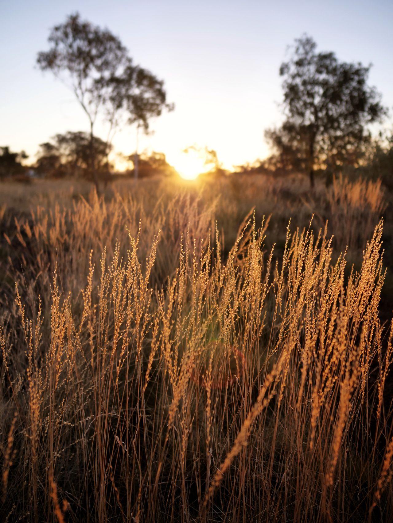 plant, field, growth, sky, land