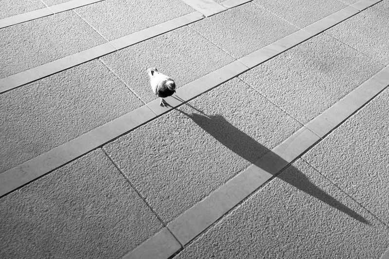 High angle view of pigeon perching on wall