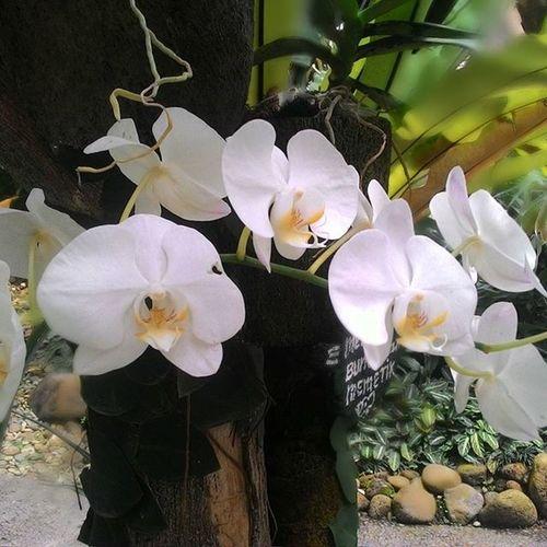 Nofilter Orchid Botanicalgarden Deepfield