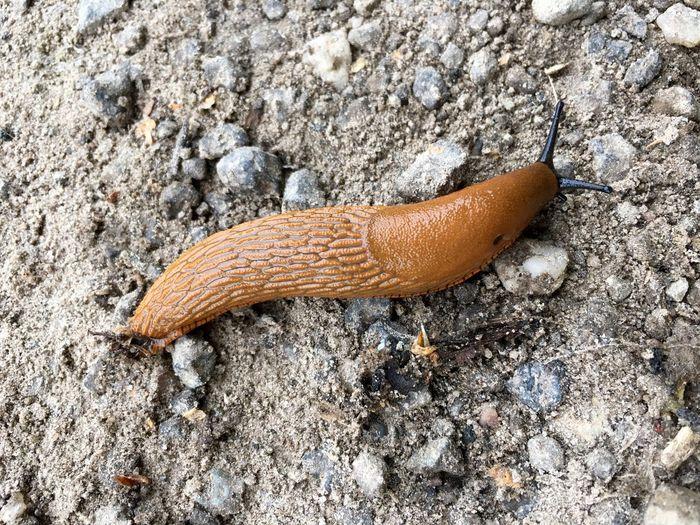 Slug on sand