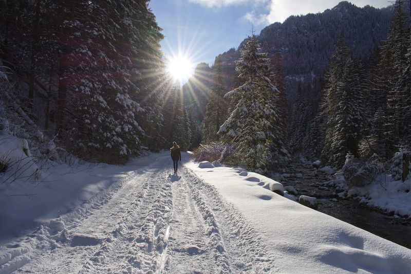 Poland Christmas Zakopane Sunlight Cold Temperature Snow Winter Tree Nature Plant Sky Sunbeam Beauty In Nature Day Sun Lifestyles Real People Lens Flare Covering Leisure Activity Outdoors