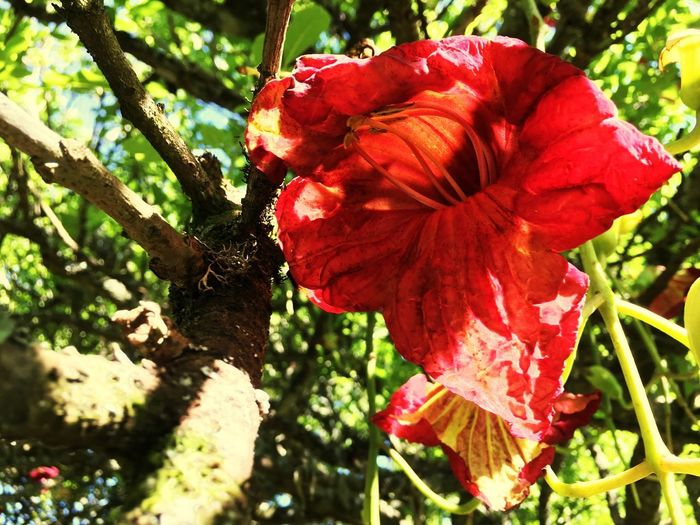 Flower in the tree Plant Red Growth Flower Flowering Plant Beauty In Nature Fragility EyeEmNewHere