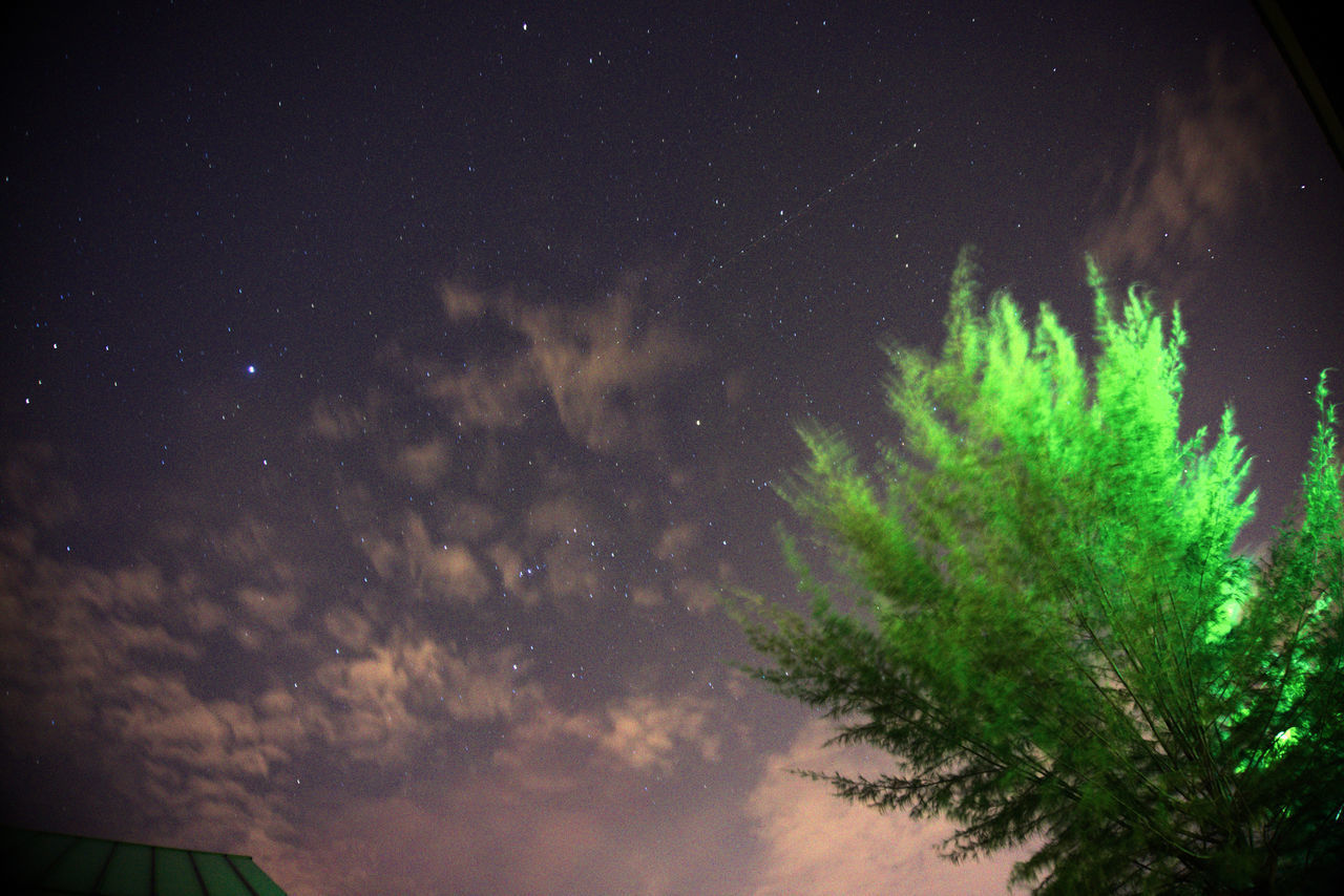 night, star - space, nature, low angle view, no people, sky, beauty in nature, star field, tranquility, astronomy, outdoors, tree, starry, galaxy, space