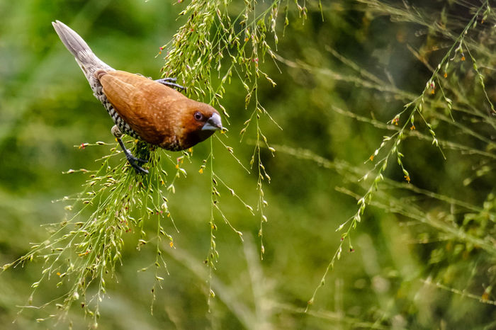 Munia Naturelovers Closeup Naturesbeauty Nature_collection Birds_collection Wildlife Green Color Bird Bird Photography Munia Bondol One Animal Insect Animals In The Wild Animal Themes Animal Wildlife Butterfly - Insect Nature Focus On Foreground Close-up Beauty In Nature Plant No People