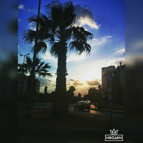 Photo -> Lenia_rose ✌ 📷