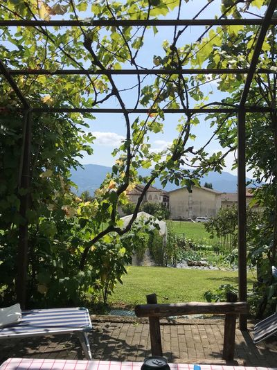 Lunch Green Mountain Mountains Italy Plant Tree Day Growth Nature Green Color Sunlight No People Park Beauty In Nature Bench Tranquility