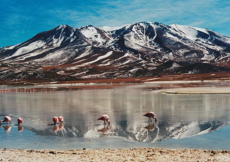 Bolivia Bolivian Altiplano Cañapa Lake Potosí Department Uyuni Uyuni Salt Flat Flamencos Geiser Laguna Cañapa Laguna Colorada Sol De Manana Árbol De Piedra
