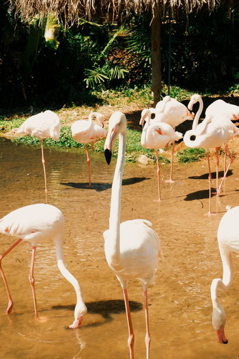 Animal Themes Group Of Animals Animals In The Wild Animal Animal Wildlife Bird Vertebrate Flamingo Large Group Of Animals No People Day Nature Land Beauty In Nature Sunlight Zoology Lake Water Field Flock Of Birds Freshwater Bird