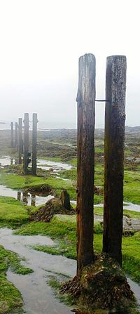 Outdoors No People Day Sky Misty Morning Seaweed Rocks And Water Rock Pools Old Wooden Structure Eyemphotography EyeEm Best Shots - Nature Dull Sky St Marys Lighthouse Calmness