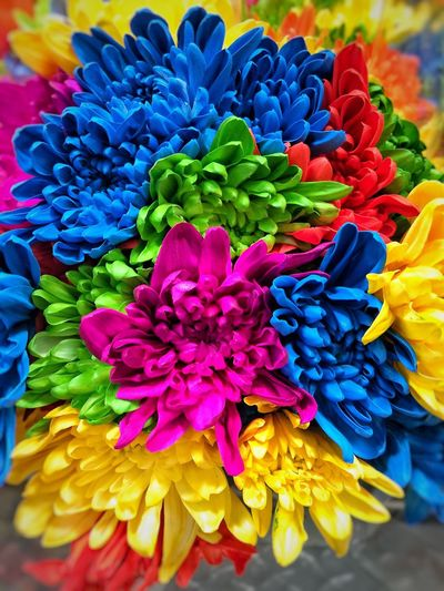 Rainbow Dasies Rainbow Flower Rainbow Bouquet Rainbow Colors Flowers Multi Colored Colorful Bouquet Flower Collection
