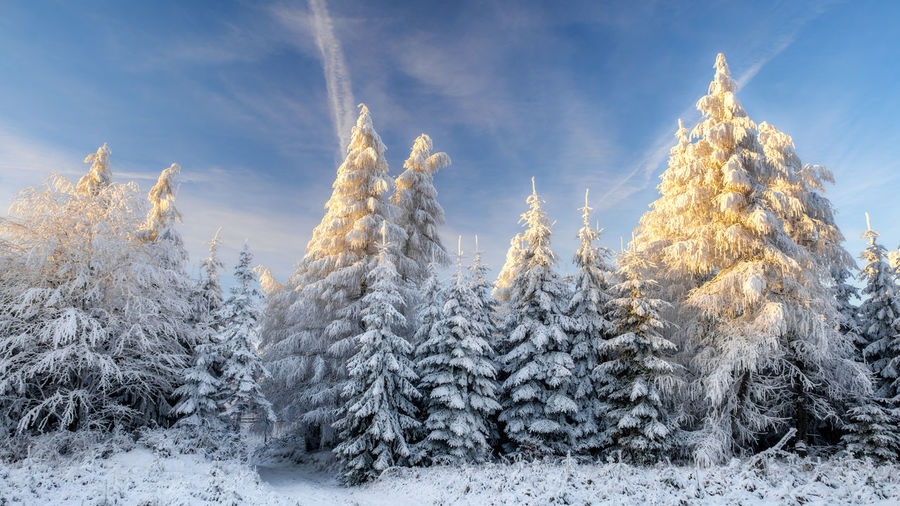 EyeEmNewHere Sunlight Beauty In Nature Blue Cold Temperature Day Forest Freshness Landscape Nature No People Outdoors Plant Scenics Sky Snow Sun Sunset Tranquil Scene Tranquility Tree White Color Winter