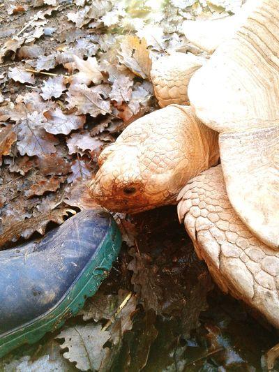 Best work ever Turtle Animal Myfoot Taking Photos Hi! Cute