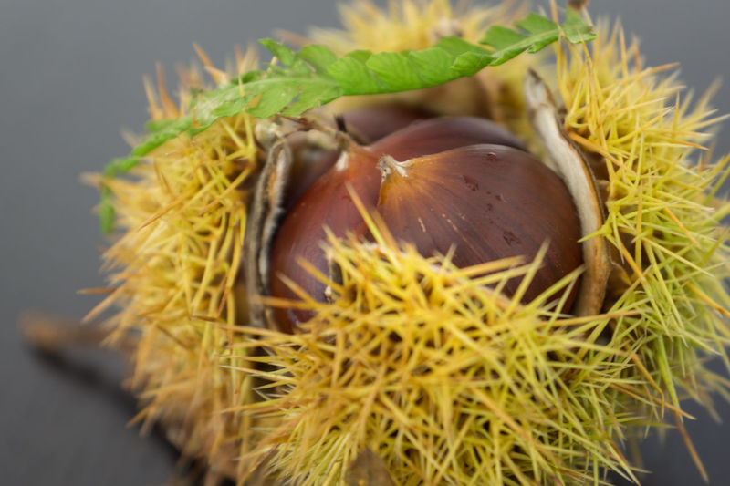 Autumn Autumn Colors Chestnut Leave Sweet Chestnut Chestnut - Food Close-up Food Food And Drink Freshness Healthy Eating Nature No People Sweet Chestnut Shell Thorn